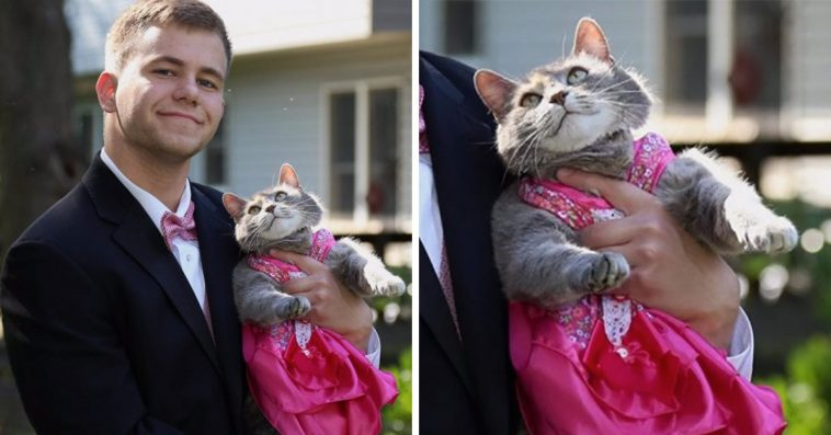 Teen Couldn't Find A Date For The Prom, So He Took His Cat Instead