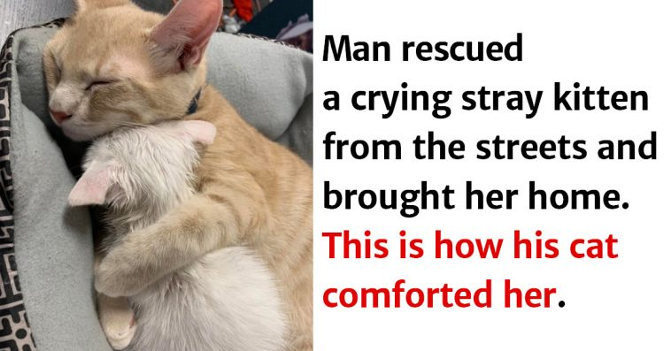 11 Adorable Photos Proving That Sometimes Animals Are Better Than People