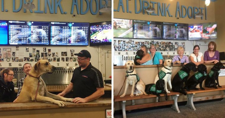 This Is Fido's, The World's First Tap House Where You Can Have A Beer And Meet Foster Dogs Up For Adoption