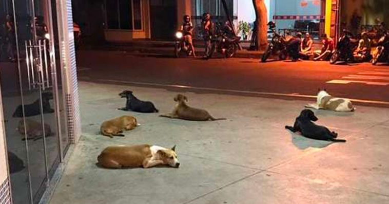 holland-officially-becomes-the-first-country-in-the-world-without-stray-dogs-01