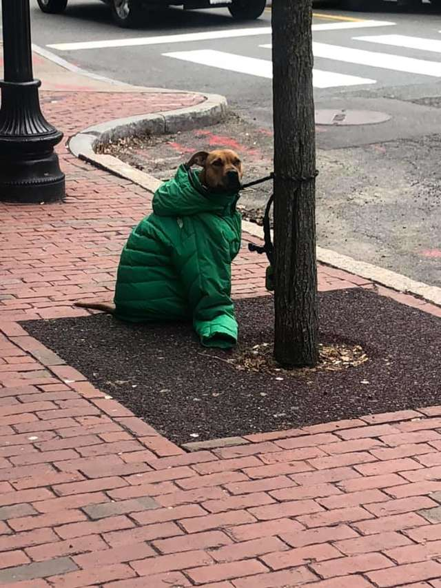 kind-woman-gives-her-own-jacket-to-shivering-dog-waiting-outside-the-post-office-01