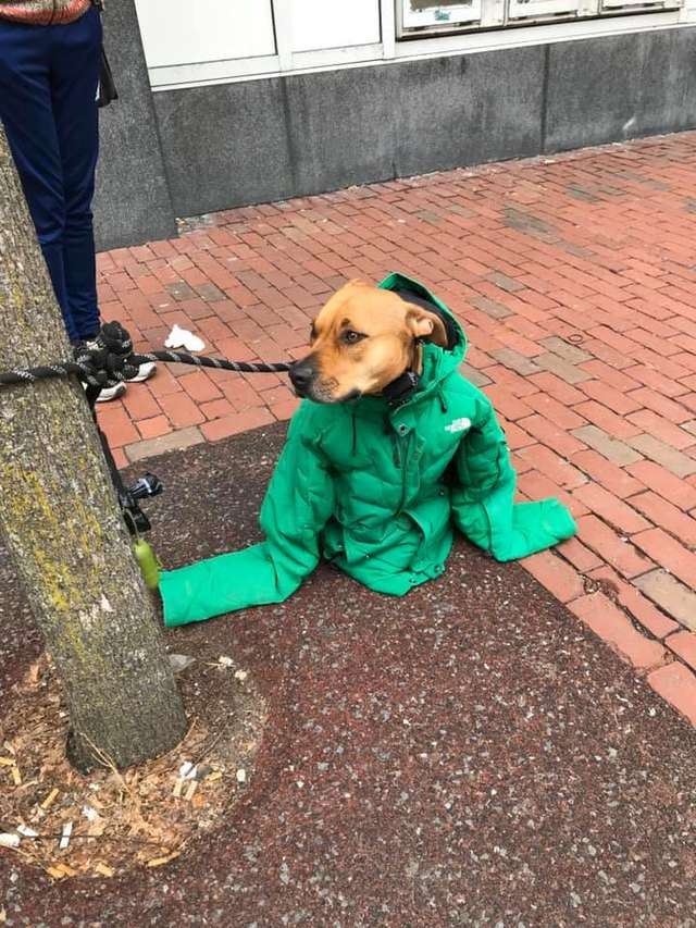 kind-woman-gives-her-own-jacket-to-shivering-dog-waiting-outside-the-post-office-02