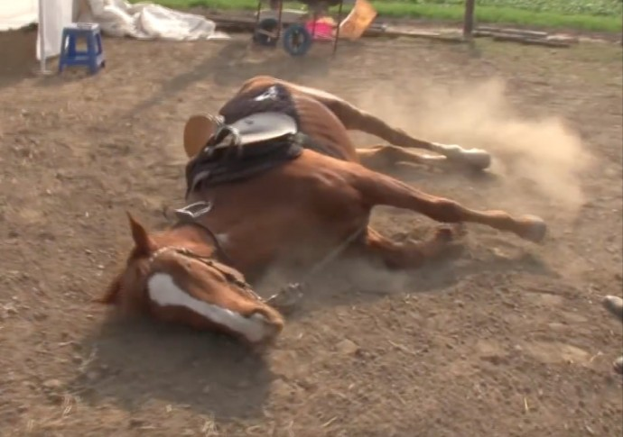 this-horse-pretends-to-be-dead-when-people-try-to-ride-him-and-he-s-so-dramatic-he-deserves-an-oscar-01-1