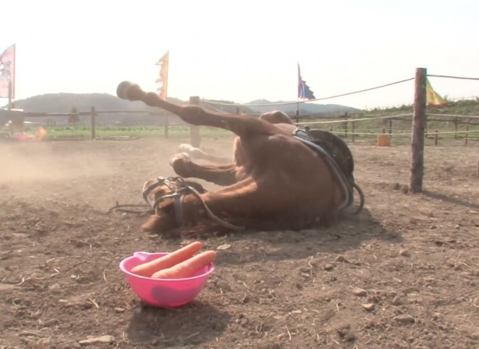this-horse-pretends-to-be-dead-when-people-try-to-ride-him-and-he-s-so-dramatic-he-deserves-an-oscar-01