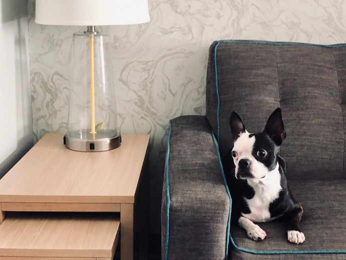 this-hotel-lets-its-guests-foster-dogs-during-their-stay-and-adopt-them-once-they-leave-01