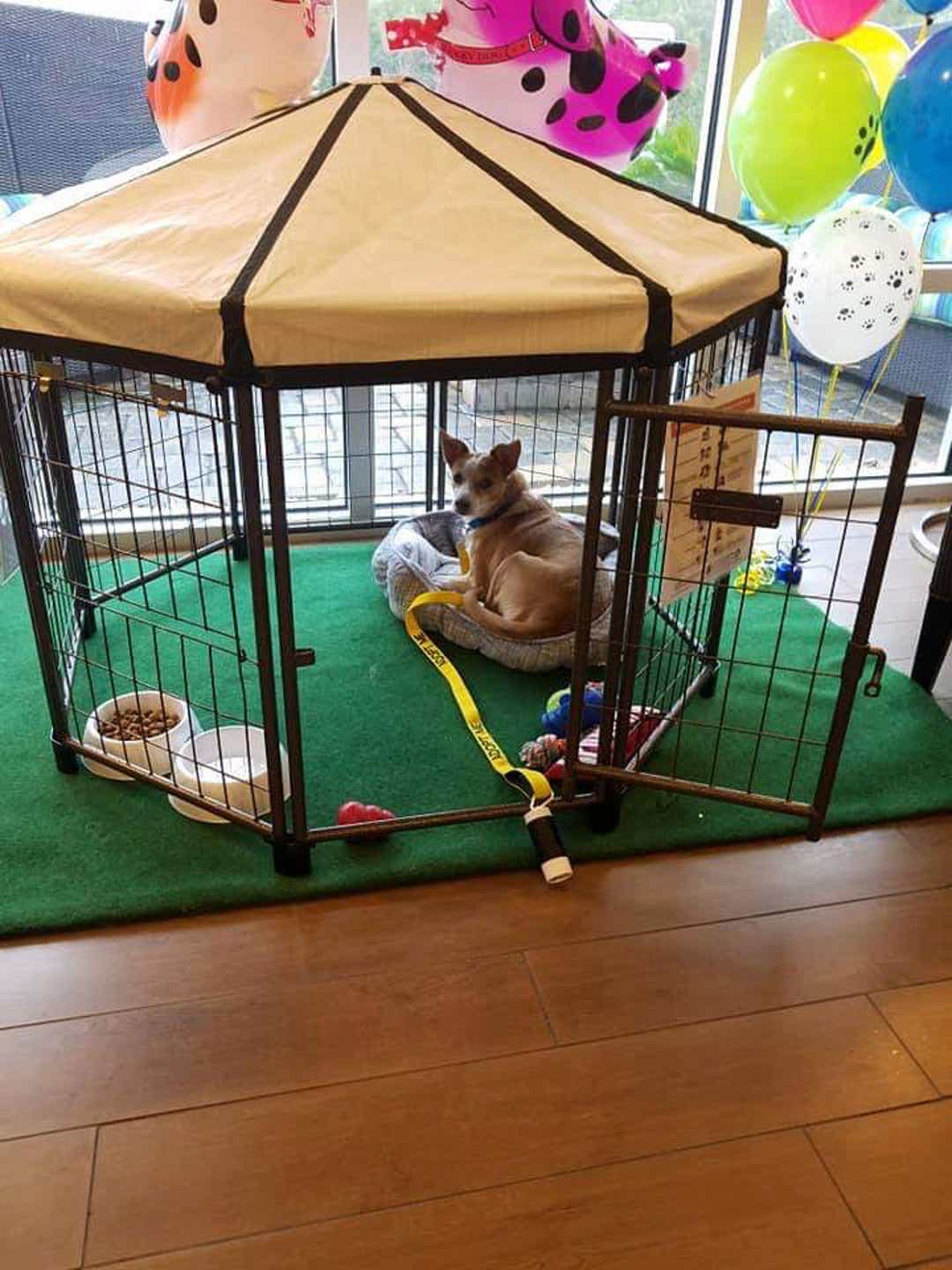 this-hotel-lets-its-guests-foster-dogs-during-their-stay-and-adopt-them-once-they-leave-02
