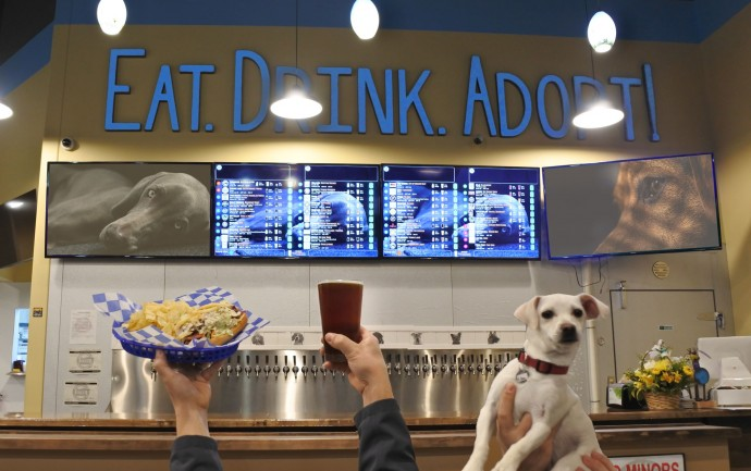 this-is-fido-s-the-world-s-first-tap-house-where-you-can-have-a-beer-and-meet-foster-dogs-up-for-adoption-01