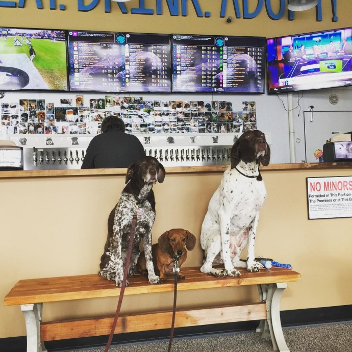 this-is-fido-s-the-world-s-first-tap-house-where-you-can-have-a-beer-and-meet-foster-dogs-up-for-adoption-03