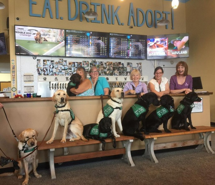 this-is-fido-s-the-world-s-first-tap-house-where-you-can-have-a-beer-and-meet-foster-dogs-up-for-adoption-04
