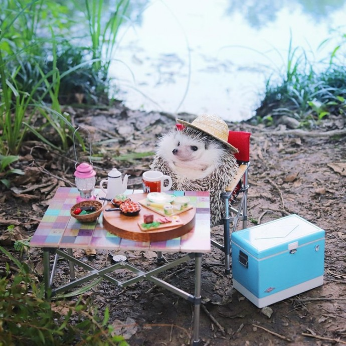 tiny-hedgehog-goes-camping-with-his-tiny-equipment-and-the-photos-are-adorable-03